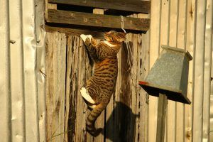 cat_climbing_structures_why_do_cats_climb_high