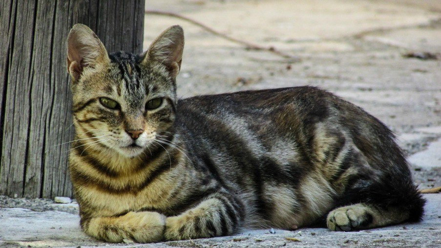 cat-resting-looking-street-163731sm