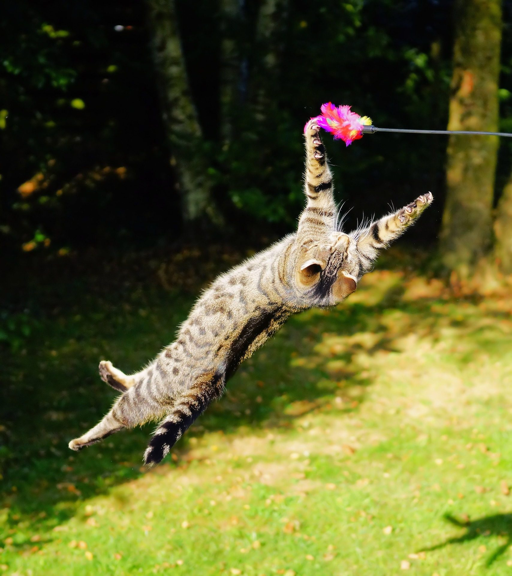 catclimgingstructures_how_do_cats_play