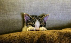 cat_climbing_structures_for_kittens