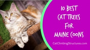 cat_climbing_structures_10_best_cat_trees_for_maine_coons_video