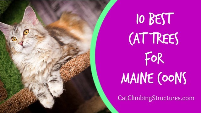 10 Best Cat Trees For Maine Coons 2019