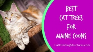cat_climbing_structures_best_cat_trees_for_maine_coons_video