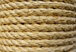 cat_climbing_structures_sisal rope