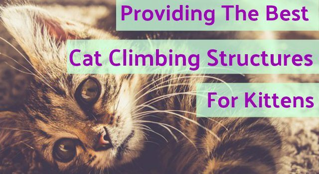 Providing The Best Cat Climbing Structures for Kittens