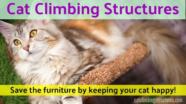 cat_climbing_structures_best_cat_furniture_for_cats
