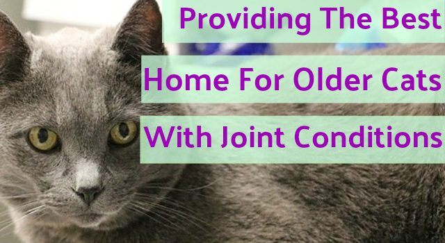 Caring for Older Cats with Joint & Mobility Issues