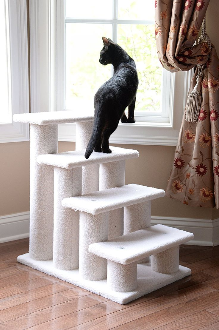 cat_climbing_structures_caring_for_older_cats_stairs