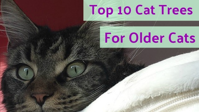 10 Best Cat Trees For Older Cats