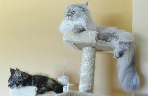 cat_climbing_structures_cat_furniture_increase_vertical_territory