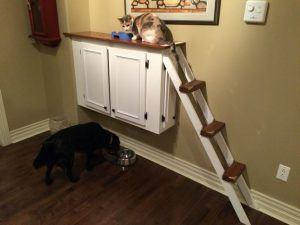 cat_climbing_structures_dog_proof_cat_station
