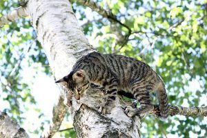 cat_climbing_structures_why_do_cats_like_to_climb_high