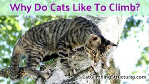 cat_climbing_structures_why_do_cats_like_to_climb_high_places_like_trees