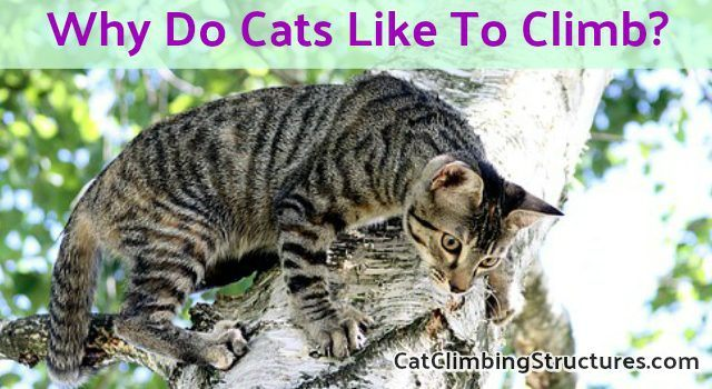 Why Do Cats Like To Climb To High Places? [5 Reasons]