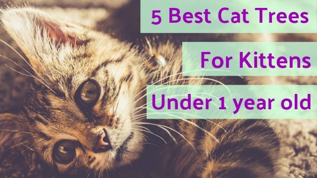 5 Best Cat Trees For Kittens Under 2 Years Old