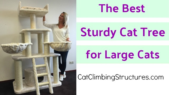 The Best Sturdy Cat Tree for Large Cats [Your Cat Needs This]