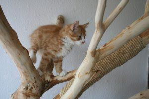 cat_climbing_structures_things_cats_climb_kitten_in_a_cat_tree