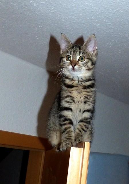 cat_climbing_structures_things_cats_climb_kitten_on_door