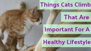 Things Cats Climb That Are Important For A Healthy Lifestyle