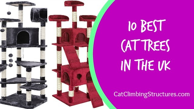 cat_climbing_structures_10_best_cat_trees_in_the_uk_logo