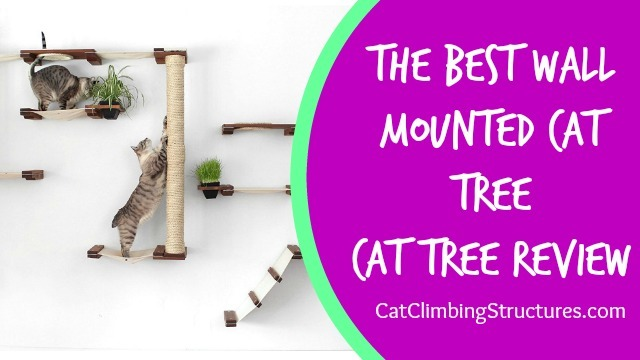 The Best Wall Mounted Cat Tree [CatastrophicCreation Review]