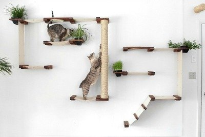 cat_climbing_structures_best_wall_mounted_cat_tree_catastrophiCreations_Cat_Mod_Garden_Complex_sm