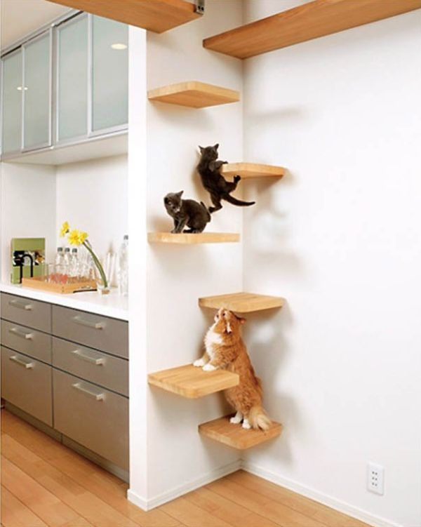 cat_climbing_structures_wall_mounted_cat_furniture