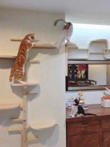 cat_climbing_structures_wall_mounted_cat_tree