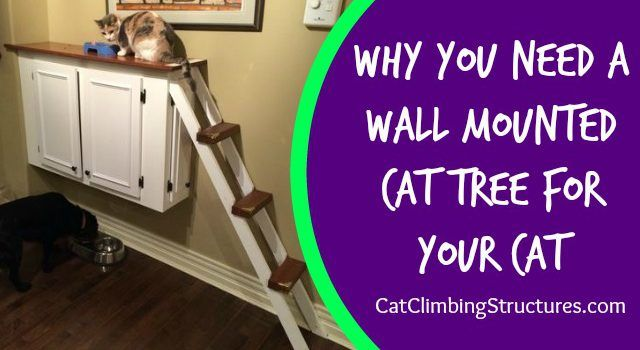 Why You Need A Wall Mounted Cat Tree for Your Cat