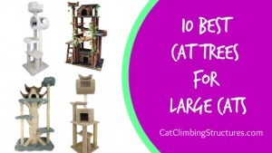 cat_climbing_structures_10_best_cat_trees_for_large_cats