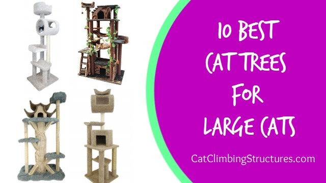 10 Best Cat Trees For Large Cats [Full Reviews]