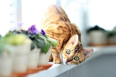 cat_climbing_structures_bengal_kitten_climbing