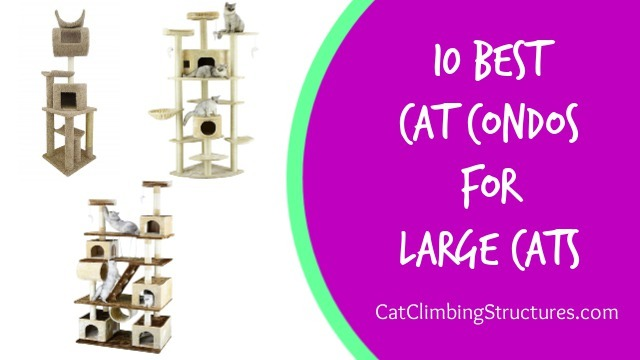 10 Best Cat Condos for Large Cats of 2018