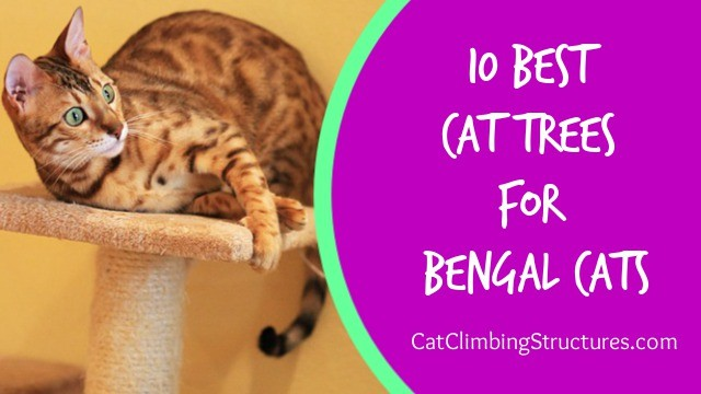 10 Best Cat Trees for Bengal Cats
