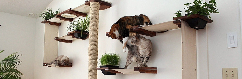 cat_climbing_structures_best_wall_mounted_cat_tree_catastrophiCreations_Cat_Mod_Garden_Complex_shelves_edit