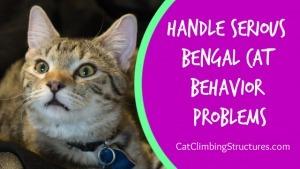 cat_climbing_structures_handle_serious_bengal_cat_behavior_problems