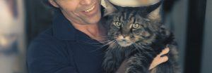 cat_climbing_structures_maine_coon_cat_large