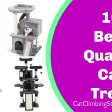 10 Best Quality Cat Trees of 2019