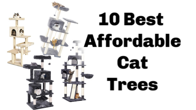 10 Best Affordable Cat Trees That Are Actually Good Quality